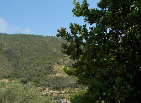 Vallebona (IM), Località Musso Inferiore: una vista su Montenero