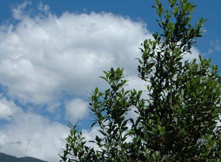 Sanremo (IM): una vista dal Borgo