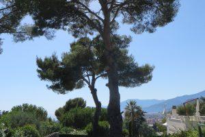 Bordighera (IM): una vista verso ponente