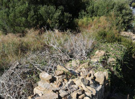 Bordighera (IM) – zona Sapergo