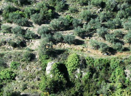 Terzorio (IM) – il vallone verso Pompeiana