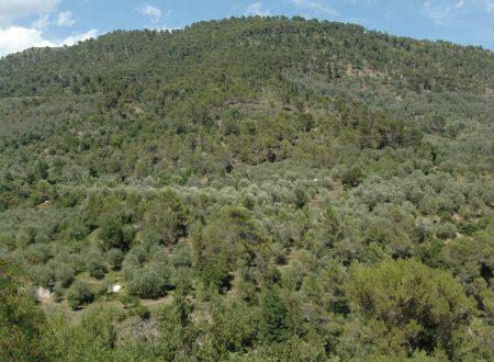 Olivetta San Michele (IM): verso la Val Roia