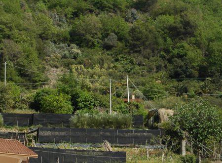 Vallecrosia (IM): Località Inicarli